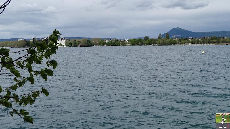 2019-04-27 : Balade au bord du Lac d'Annecy (74) 2019-04-27_lac_annecy_21
