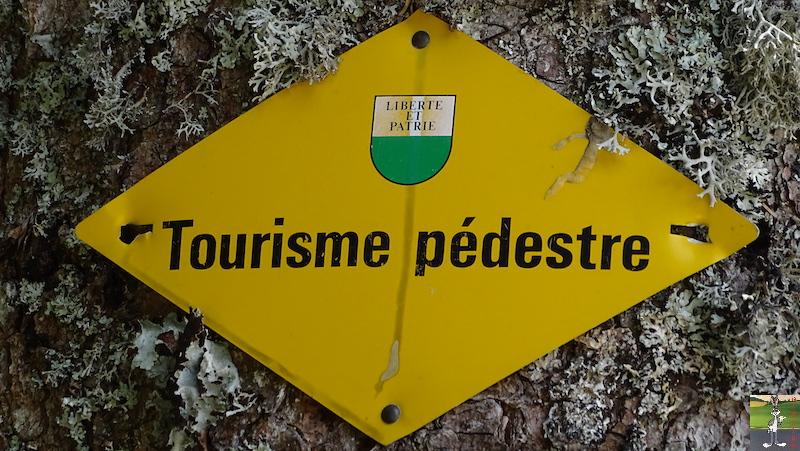 2019-05-01 : Balade dans la forêt à La Cure (VD, CH) 2019-05-01_la_cure_01