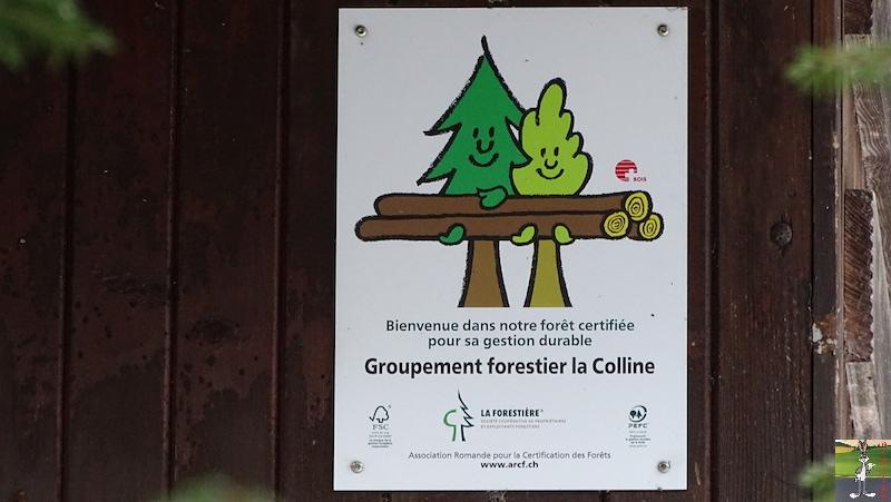 2019-05-01 : Balade dans la forêt à La Cure (VD, CH) 2019-05-01_la_cure_10