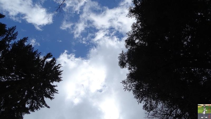 2019-05-01 : Balade dans la forêt à La Cure (VD, CH) 2019-05-01_la_cure_11
