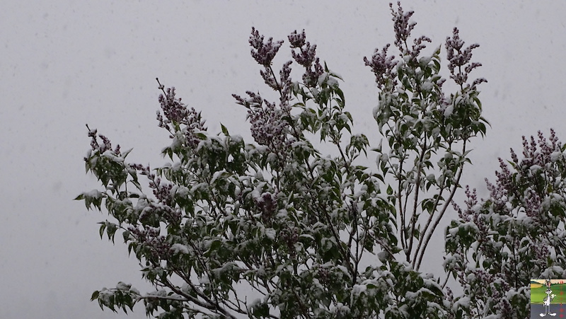 2019-05-04 : Re re re re re retour de la neige à La Mainmorte (39) 2019-05-04_neige_04