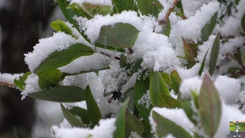 2019-05-04 : Re re re re re retour de la neige à La Mainmorte (39) 2019-05-04_neige_05