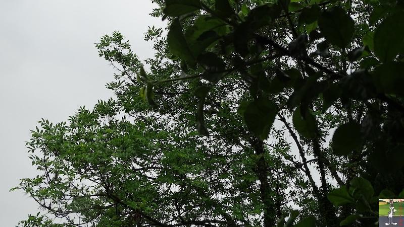2019-06-09 : Journée pluvieuse à La Mainmorte (39) 2019-06-09_mauvais_temps_02