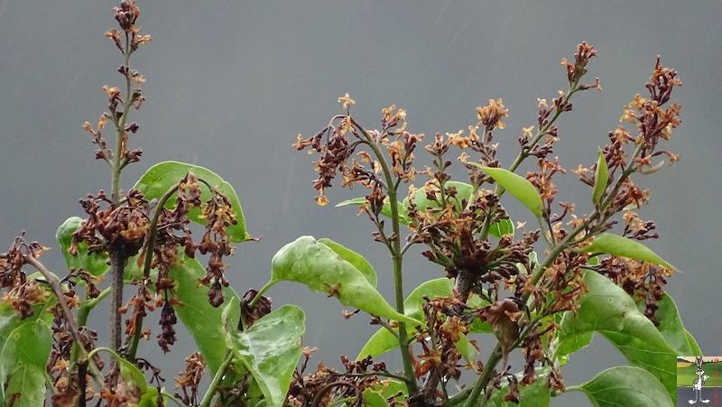 2019-06-09 : Journée pluvieuse à La Mainmorte (39) 2019-06-09_mauvais_temps_05