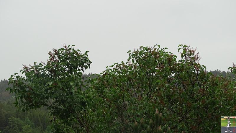 2019-06-09 : Journée pluvieuse à La Mainmorte (39) 2019-06-09_mauvais_temps_08