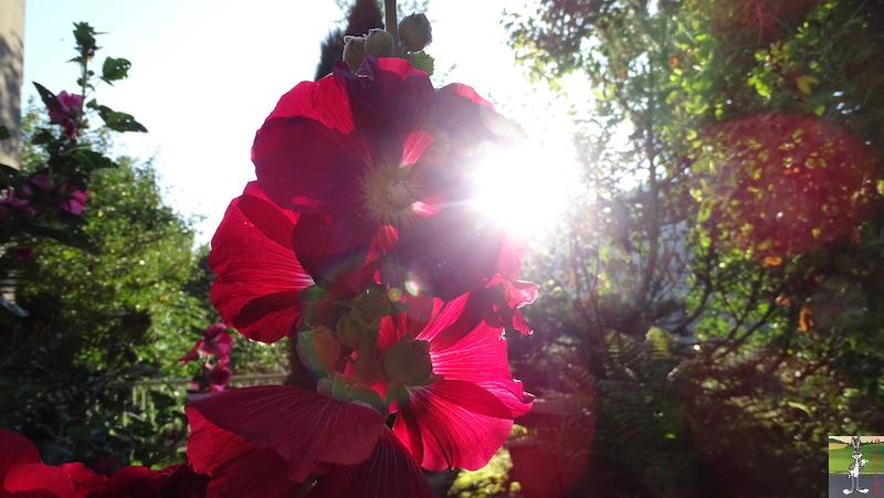 """Les 4 Saisons de """"Mon Jura"""" - Page 26 2019-08-31_fleurs_02"""