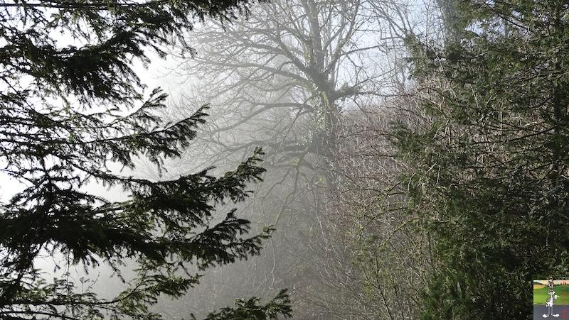 [39] - 2020-01-11 : Balade entre soleil et brouillard à La Mainmorte 2020-01-11_Mainmorte_04