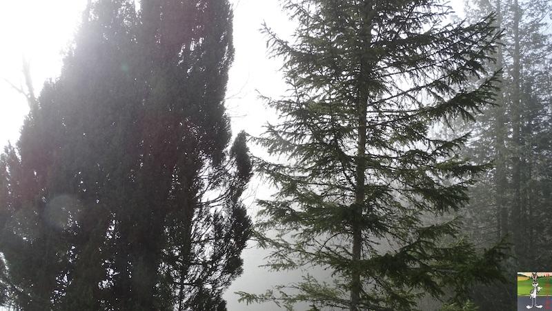 [39] - 2020-01-11 : Balade entre soleil et brouillard à La Mainmorte 2020-01-11_Mainmorte_12