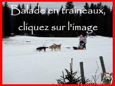 Balade en traineaux - 26/02/2008 V1