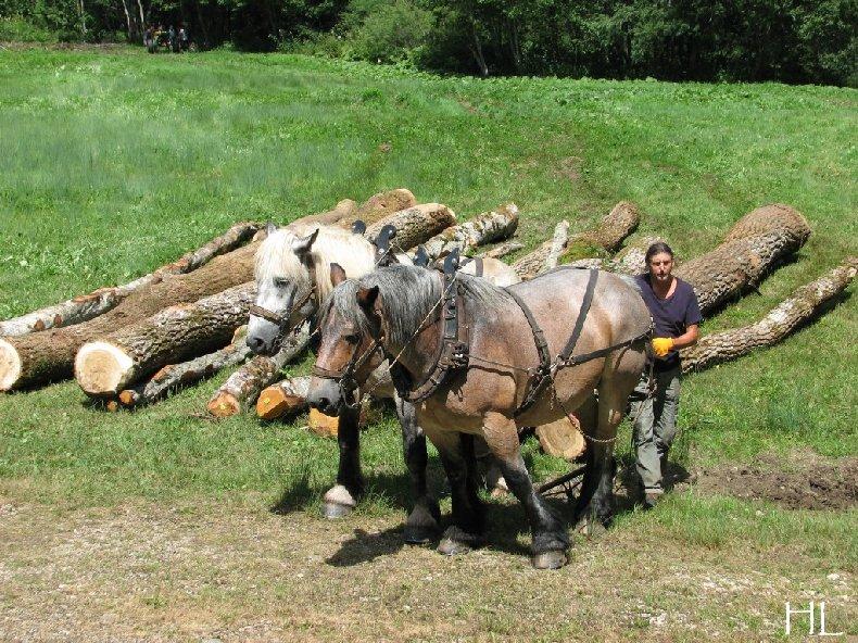 2010-07-27 : Débardage avec des chevaux - Hélène L. 0004