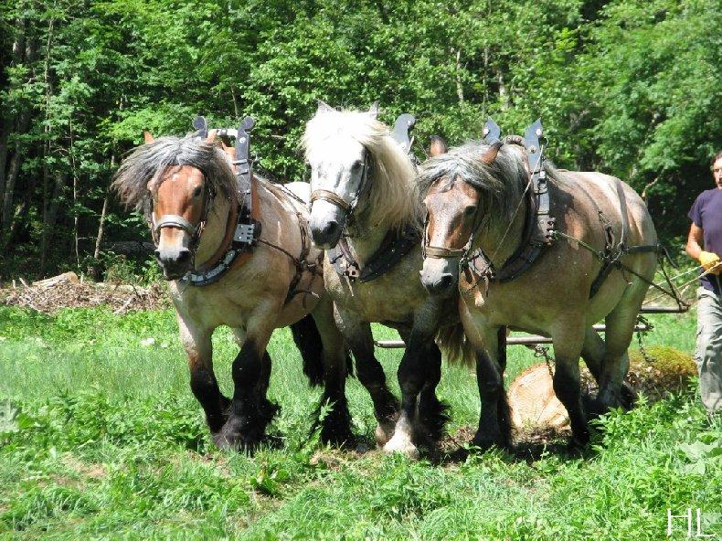 2010-07-27 : Débardage avec des chevaux - Hélène L. 0007