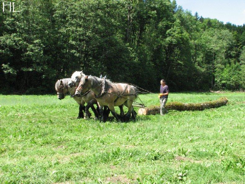 2010-07-27 : Débardage avec des chevaux - Hélène L. 0012
