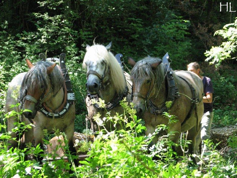 2010-07-27 : Débardage avec des chevaux - Hélène L. 0013