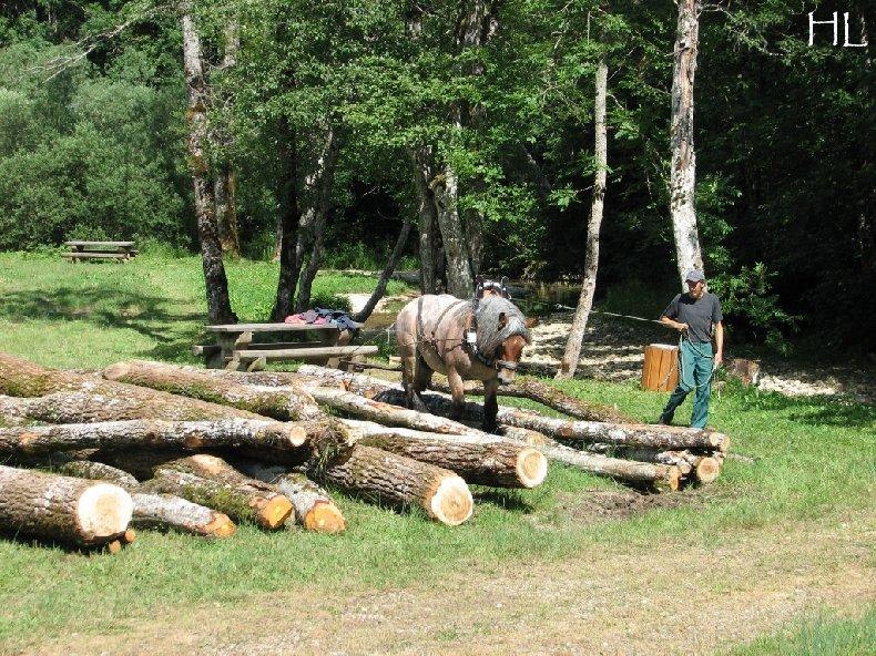 2010-07-27 : Débardage avec des chevaux - Hélène L. 0017