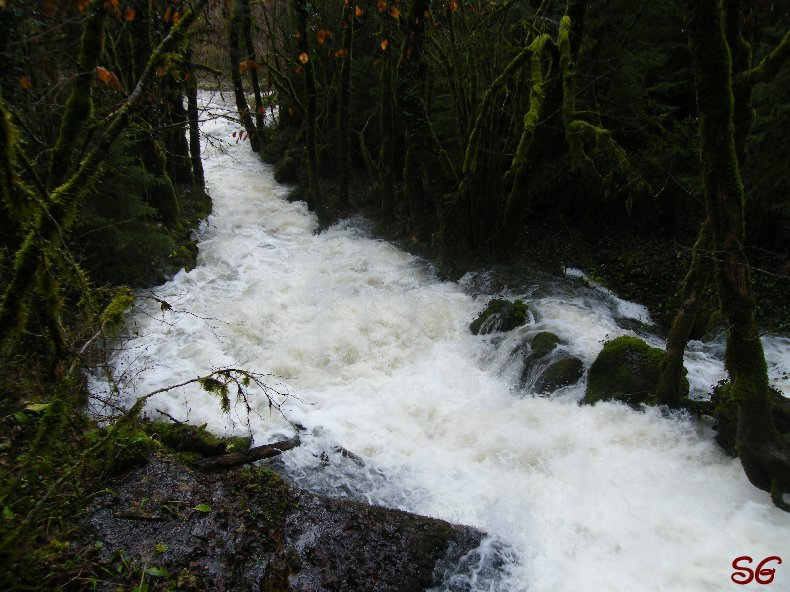 Les Monts de Bienne à l'Automne - Sandrine - novembre 2009 0002