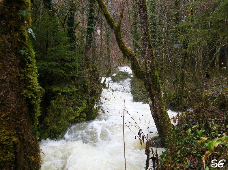 Les Monts de Bienne à l'Automne - Sandrine - novembre 2009 0011
