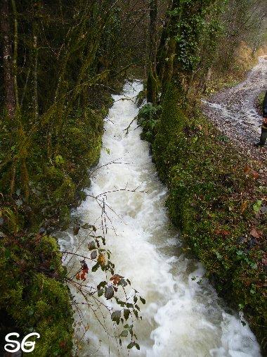 Les Monts de Bienne à l'Automne - Sandrine - novembre 2009 0014