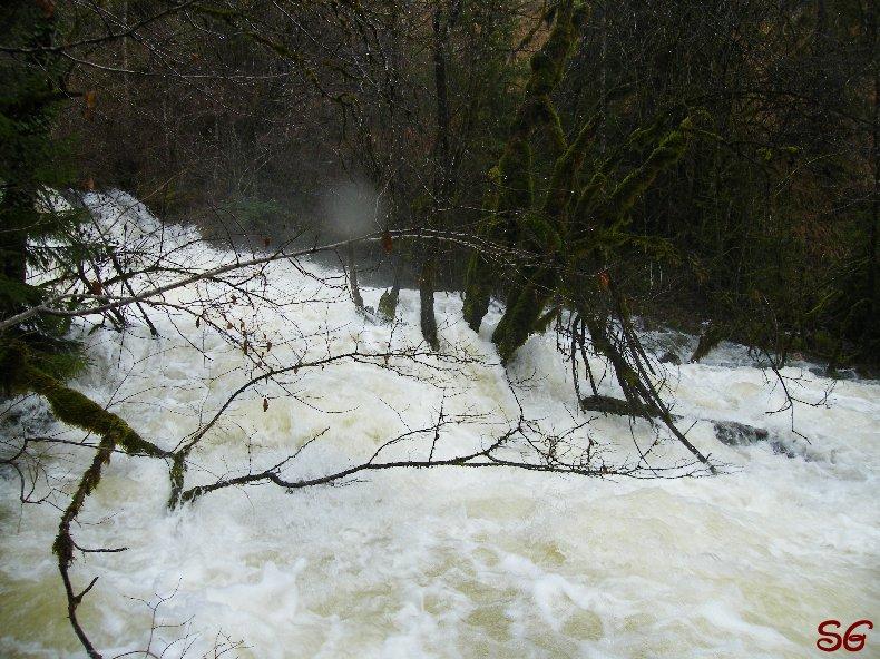 Les Monts de Bienne à l'Automne - Sandrine - novembre 2009 0018