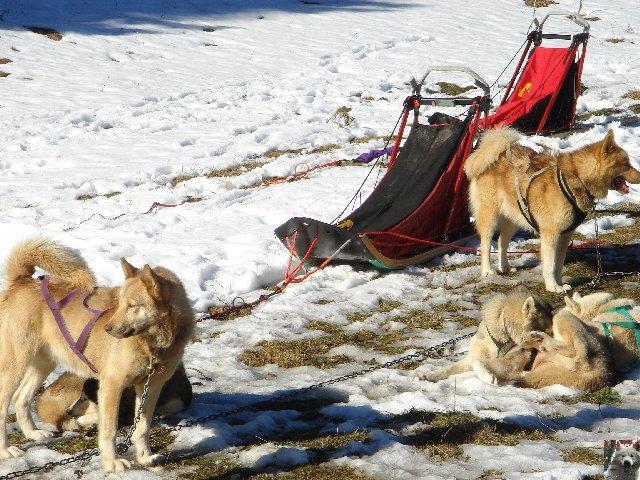 Attelages de chiens polaires - 04/02/2007 - (39) 0001