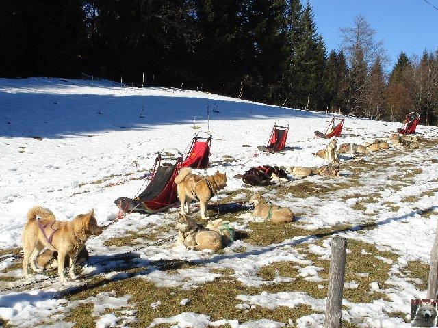 Attelages de chiens polaires - 04/02/2007 - (39) 0002