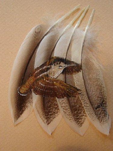 2006-06-06 : David Mayet - Peintre sur plumes. 0016