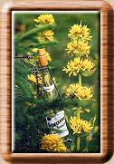 La Gentiane - Fleurs, Racines et Distillation - (25) 0001