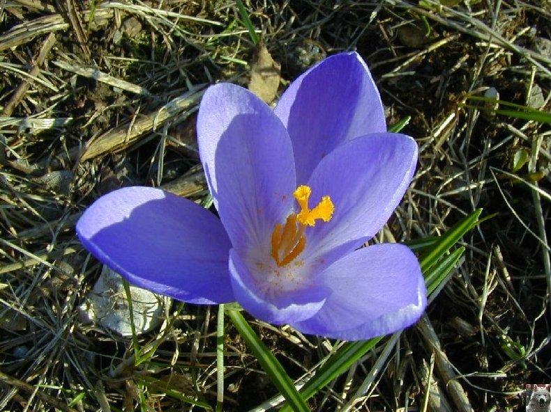 Fleurs de nos champs 0005a