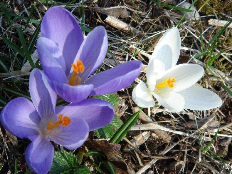 Fleurs de nos champs 0006