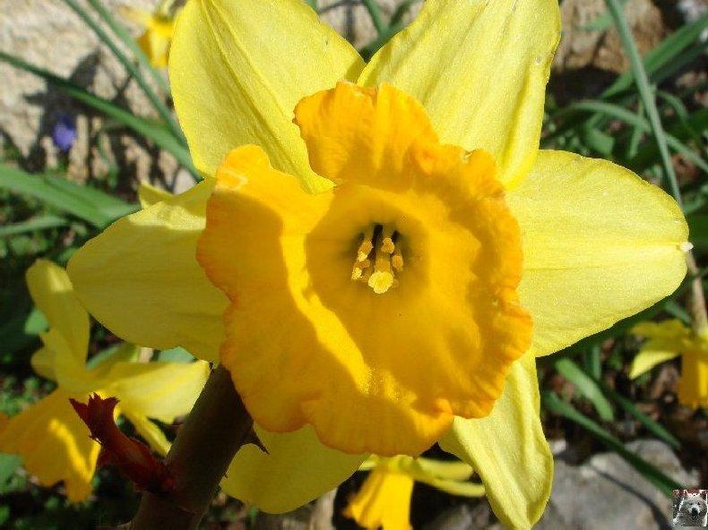 Fleurs de nos champs 0018