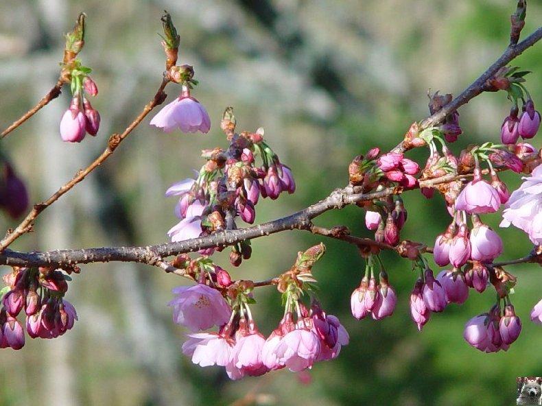 Fleurs de nos champs 0019