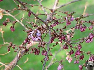 Fleurs de nos champs 0020