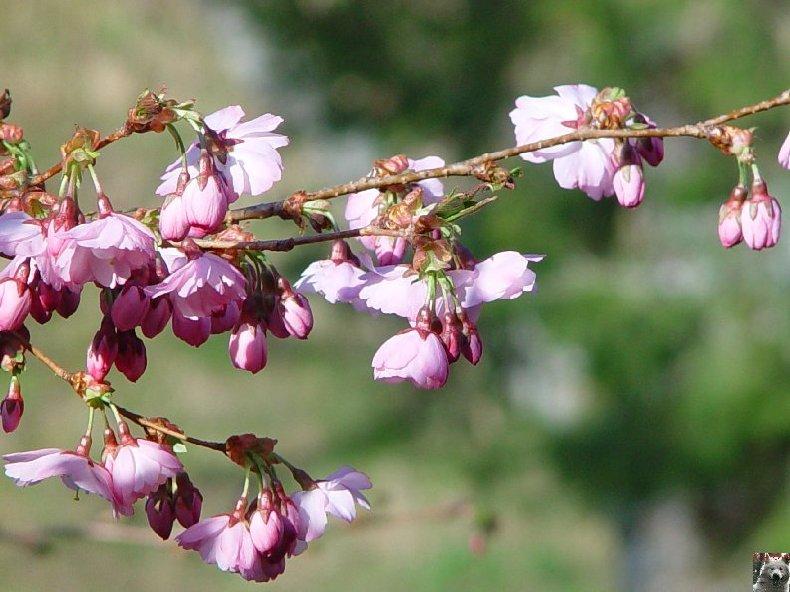 Fleurs de nos champs 0022