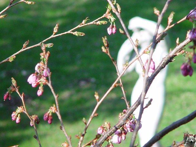 Fleurs de nos champs 0023