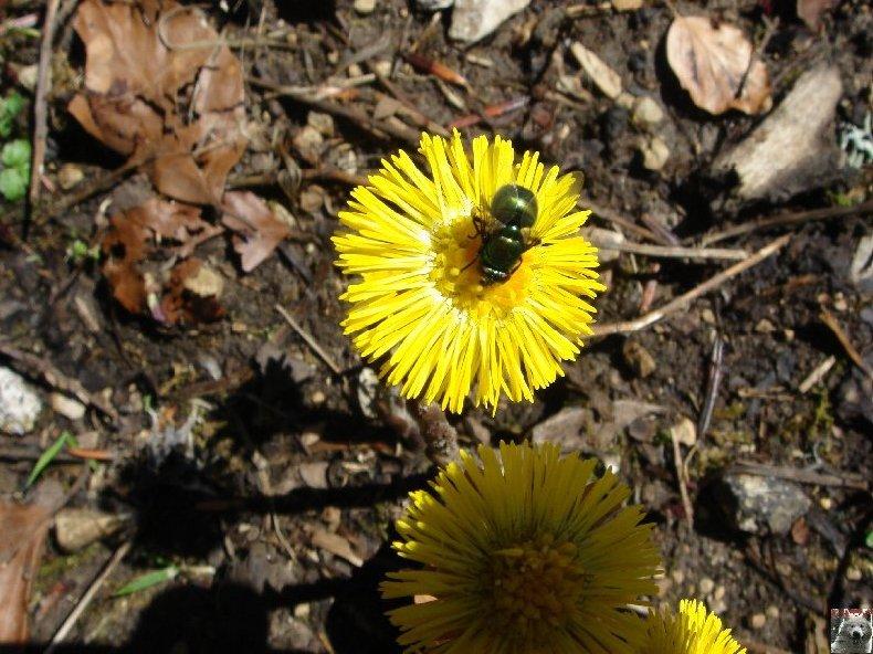 Fleurs de nos champs 0027
