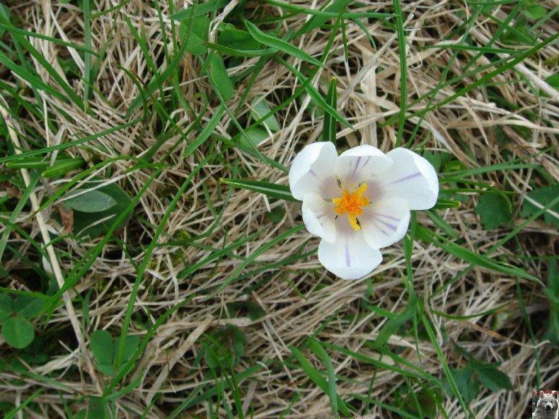 Fleurs de nos champs 0037