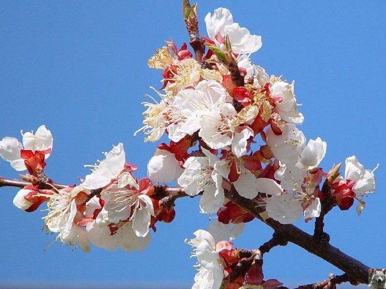 Fleurs de nos champs 0039