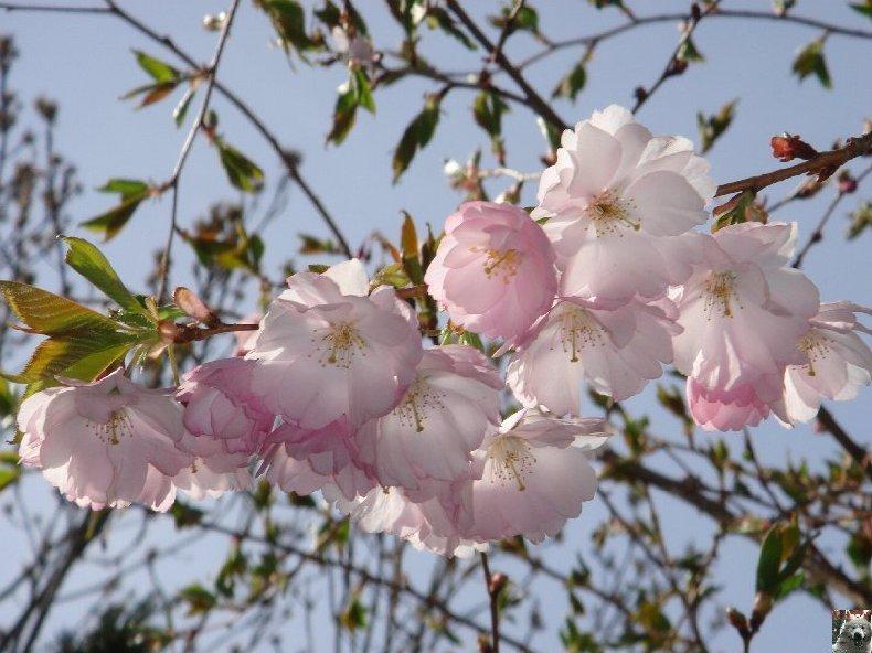 Fleurs de nos champs 0040