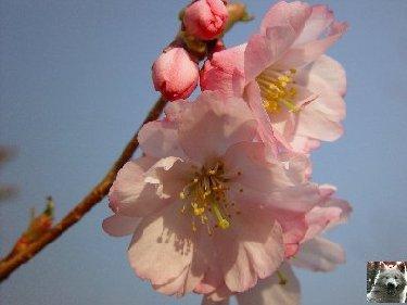 Fleurs de nos champs 0041