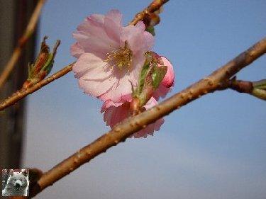 Fleurs de nos champs 0042