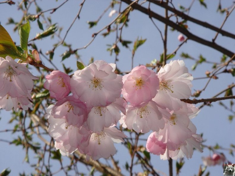 Fleurs de nos champs 0043