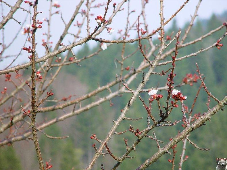 Fleurs de nos champs 0044