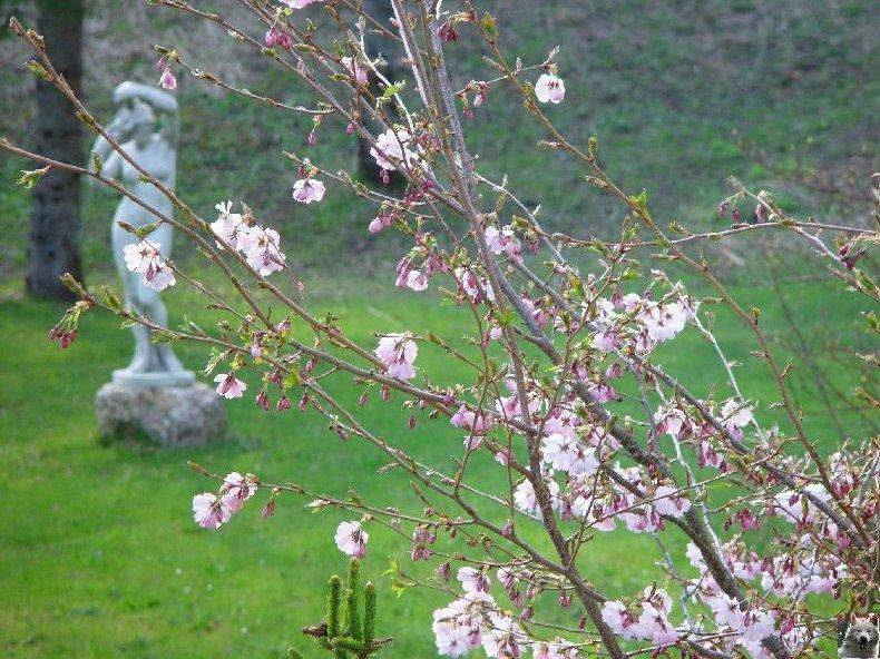 Fleurs de nos champs 0046