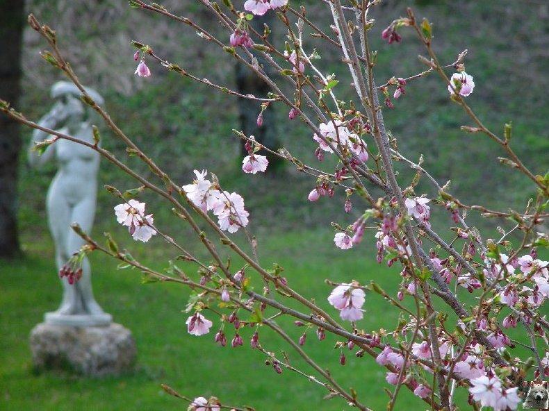 Fleurs de nos champs 0047