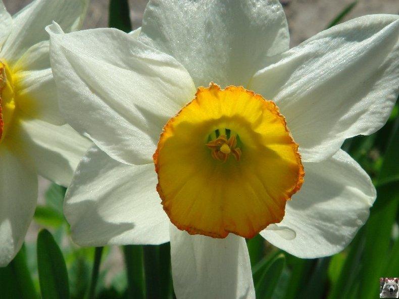 Fleurs de nos champs 0048