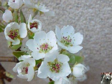 Fleurs de nos champs 0050