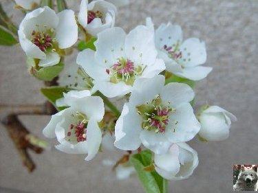 Fleurs de nos champs 0051