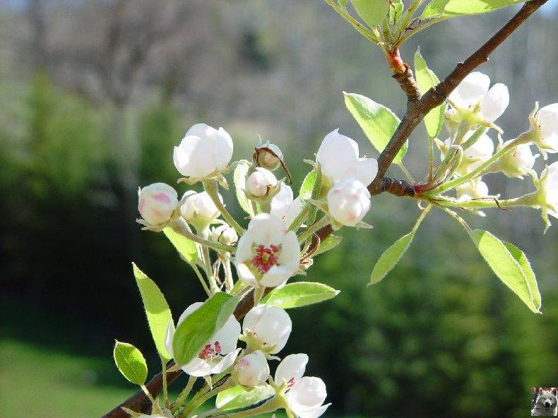 Fleurs de nos champs 0052