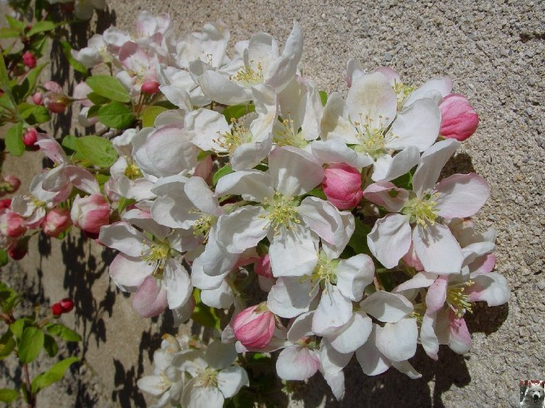 Fleurs de nos champs 0053