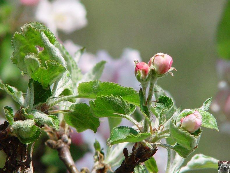 Fleurs de nos champs 0054