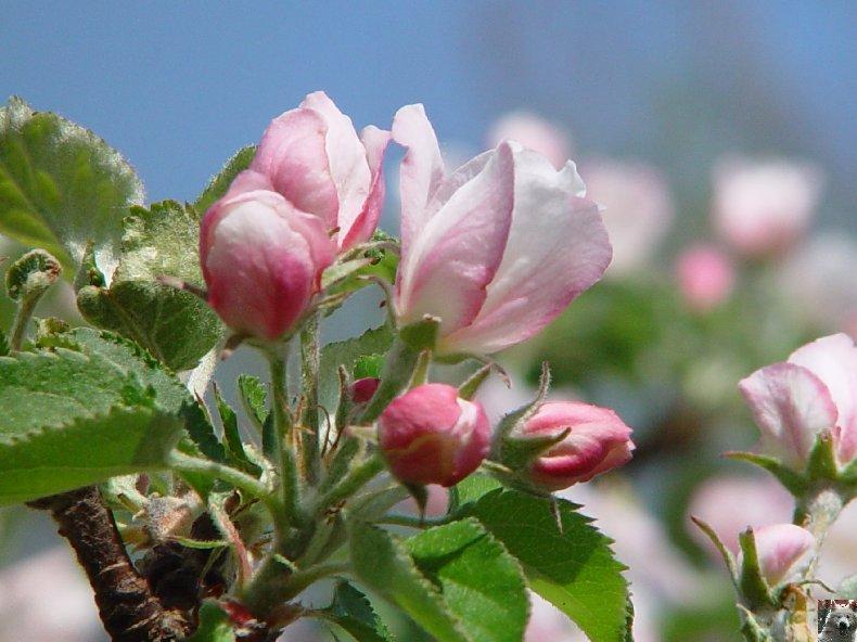 Fleurs de nos champs 0055